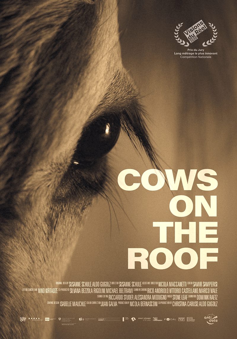 Cows on the Roof